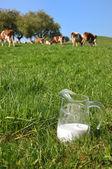 Pot de lait contre le troupeau de vaches. région de l'emmental, suisse — Photo