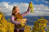 Girl with a basket full of grapes. Lavaux region, Switzerland — Stock Photo