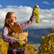 Girl with a basket full of grapes. Lavaux region, Switzerland — Stock Photo #37872153