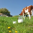 Jug of milk against herd of cows. Emmental region, Switzerland — Stock Photo #38085159