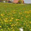 Foto Stock: Jug of milk on meadow. Emmental region, Switzerland