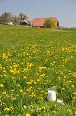 Jarra de leche en el prado. región de emmental, suiza — Foto de Stock