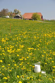 Tillbringare av mjölk på ängen. emmental regionen, schweiz — Stockfoto