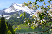 Spring — Стоковое фото