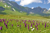 Alpine meadow. — Stock Photo
