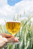 Glass of beer in the hand — Stock Photo