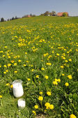 Jug of milk on the meadow. — 图库照片