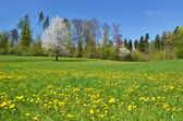 Beautiful spring meadow — Stock Photo