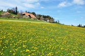 Spring in Emmental — Stock Photo