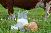Milk and cows. — Foto Stock