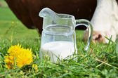 Milk and cows — Stock Photo