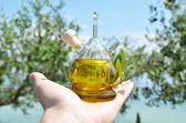 Olivový olej v ruce — Stock fotografie