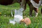 Milk and cows. Emmental region, Switzerland — Photo