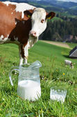 Milk and cow. Emmental region, Switzerland — Stock Photo