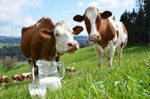 Milk and cows. Emmental region, Switzerland — Stockfoto