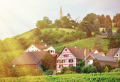 Vineyards in Rhine region — Stock Photo