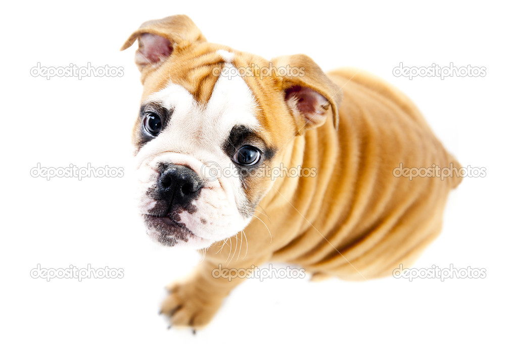 Dog on the wihte background — Stock Photo #15717137
