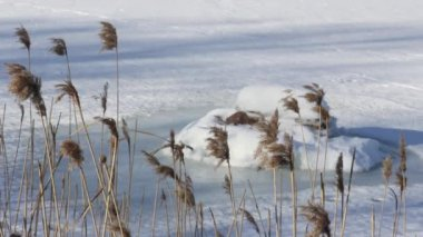 Winter grass in the wind — Stok video