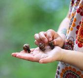 Holding Snails — Stock Photo