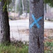 Stock Photo: Marked Tree