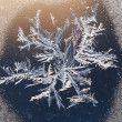 Stock Photo: Ice flower on a window