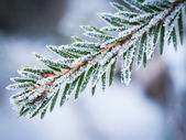 Tree in winter — Stock Photo
