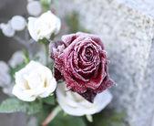 墓穴上的玫瑰 — 图库照片