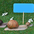 Three snails - Stock Photo