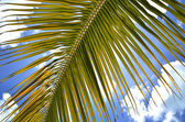 Palm branch against blue sky — Stock Photo