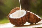 Kokosnüsse. — Stockfoto