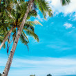 Beautiful exotic beach with coconut palm  — Stock Photo