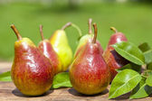Autumn fresh pear over old wood board — Foto Stock