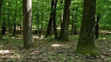 лес — Стоковое видео
