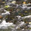 River detail - Stockfoto
