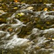 Small river — Stock Photo