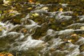 Small river — Stock Photo