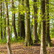 Green forest in spring — Stock Photo