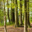 Stock Photo: Green forest in spring