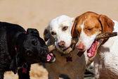 犬 — ストック写真