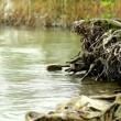 Tree roots in the water - Stock Photo