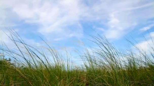 La hierba verde y el cielo azul — Vídeo de stock