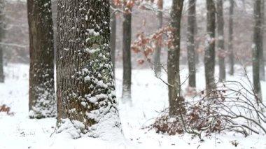 Nevadas del invierno — Vídeo de Stock