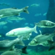 Marine life in the aquarium — Vídeo Stock