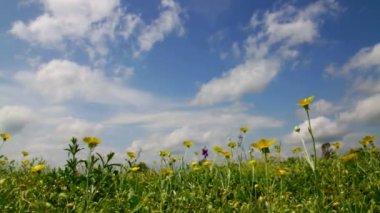 Hermosas flores silvestres en el viento — Vídeo de stock