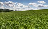 Campo di cereali — Foto Stock