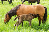 Horse family — Stock Photo