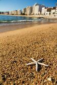 Starfish on the beach sand — Stock Photo
