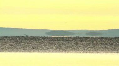 Beautiful sunrise over the lake Balaton of Hungary, with migratory swallows — Stock Video
