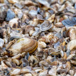 Many dry shell — Stock Photo #35448211