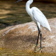 Cute little egret — Stock Photo